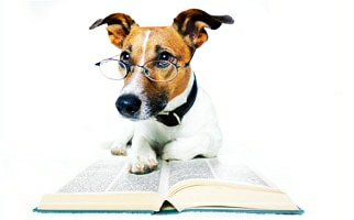Photo of THE MOST INTELLIGENT domestic dog.